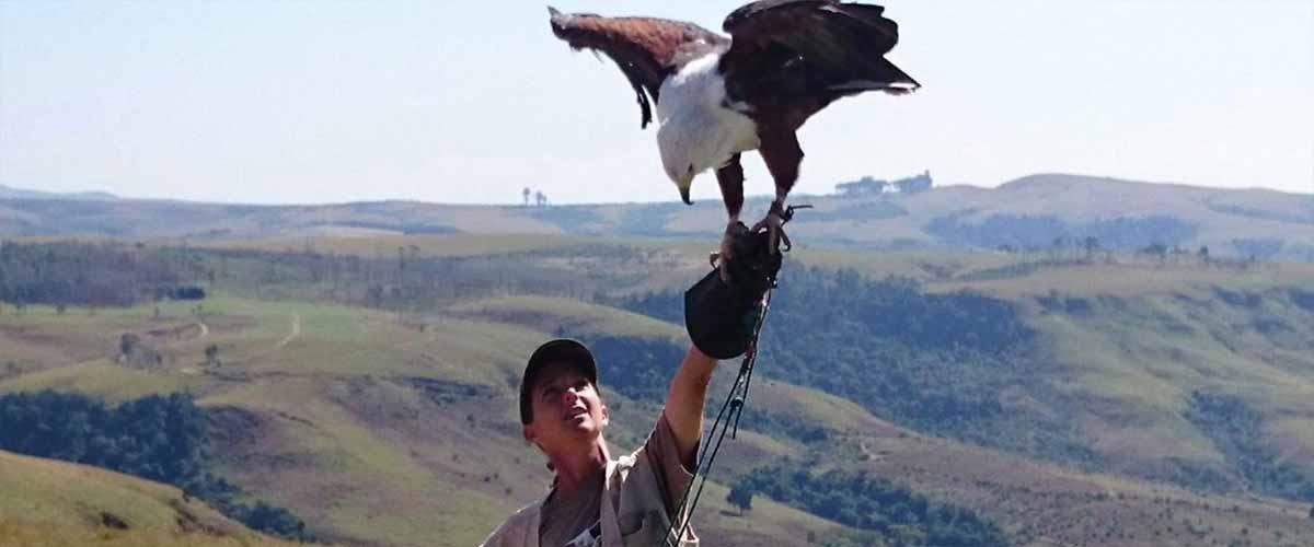 drakensberg-activities-bird-of-prey-show