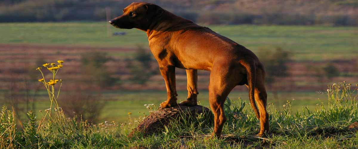 drakensberg-pet-friendly-walking-trails